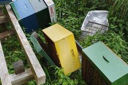 """Vandalen gooien bijenkasten om in Hilversum: """"Hoop dat ze flink gestoken zijn"""""""