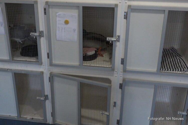 Minister belooft oplossing voor noodlijdend Naarder vogelhospitaal