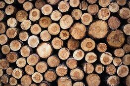 Petitie tegen bomenkap in 't Gooi: in korte tijd meer dan 1400 handtekeningen