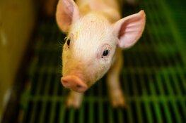 Pensioenfonds ABP negeert dierenwelzijn in nieuw beleid