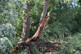 Omgewaaide boom zorgt voor overlast in Weesp