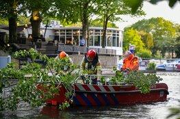 Grote boom in Hilversum waait om door harde wind