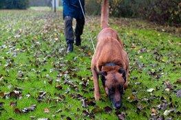 Politiehond vindt verdachte op bouwterrein