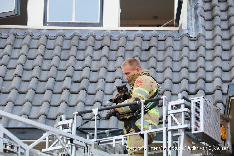 Kat Sammie onder luid applaus van dak gered in Bussum