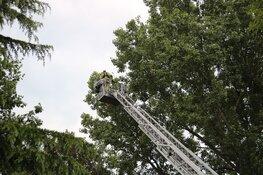 Papegaai Zazu na dag uit boom gered