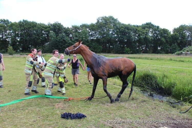 Paard uit sloot gered in Blaricum