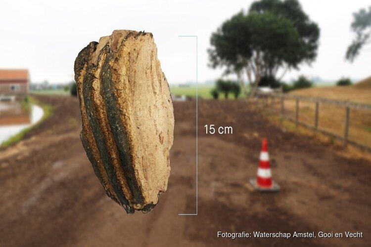 Toevalstreffer: flinke kies van mammoet opgegraven in Wijdemeerse polder