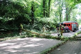 Naarderweg enige tijd afgesloten door boom over de weg