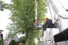 Gevaarlijk hangende tak door brandweer verwijderd