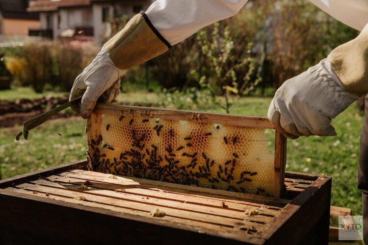 Stoomcursus bijenhouden met honingproeverij